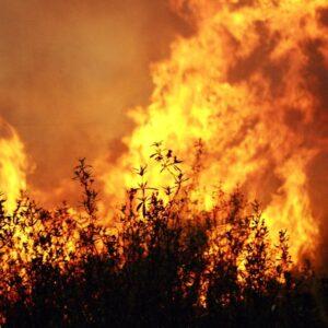 incêndios florestais e1508342022387