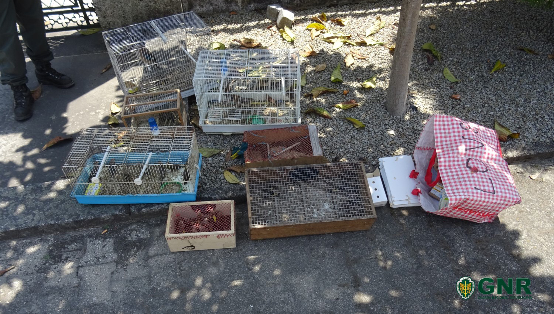 iMED 650 REG Detidos por venda ilegal de aves 1