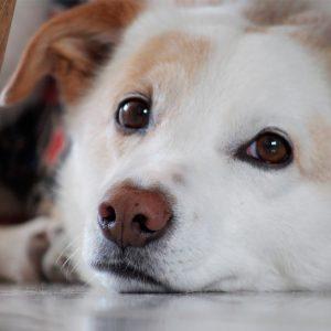 Apoio alimentar a cães e gatos