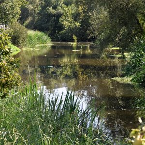 rio sousa 1