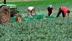 Mesmo em pandemia, setor agroalimentar fecha 2020 com aumento nas exportações