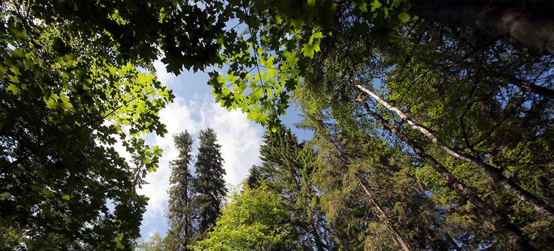 No Dia Mundial da Vida Selvagem, ONU apela à conservação dos recursos florestais